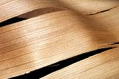 Abstract Palm Frond Wood Texture Background And Patterns
