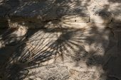 Shadow Of Fan Palms Chamaerops Humilis On Stone Floor