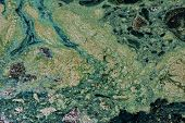 image of scum  - A detailed close up of pond scum mixed with debris floating on the water - JPG