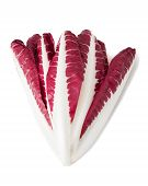 foto of chicory  - red chicory isolated on a white background - JPG