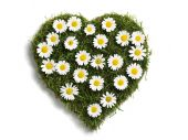 Heart Shaped Lawn With Daisies