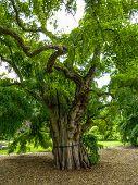 Memories Of Old Tree