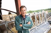 picture of cross-breeding  - Smiling farmer standing in barn - JPG