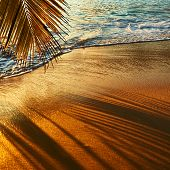 Beautiful sunset at Seychelles beach with palm tree shadow over sand
