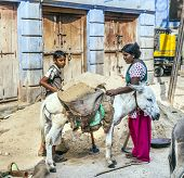 Indian Female Worker Loads The Donkey With Sand