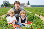 Father And Two Little Boys On Organic Strawberry Farm