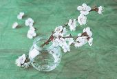Beautiful apricot blossom in transparent jar on old wooden background