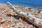 stock photo of driftwood  - the Driftwood on the beach among stones - JPG
