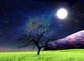 stock photo of moonlit  - Tree without leaves on the moonlit  glade - JPG