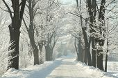 foto of icy road  - Winter lane between the trees covered with frost on a cloudless morning - JPG