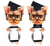 graduated dog with phone