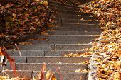 foto of stepping stones  - Stone steps in autumn park - JPG
