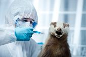 Researcher In Protective Suit And Badger