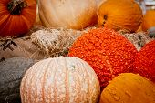 Collection of Decorative Pumpkins