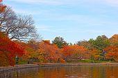Fall at Tidal Basin Washington DC.
