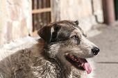 Street adult mixed breed dog
