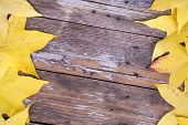 Yellow autumn leaves over aged wooden background