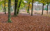 Autumn Forest With Oak Trees