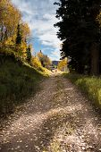 Empty path in alpine meadows during fall