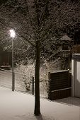 Winter's Night Tree.