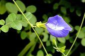 Flower In Garden