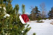 Santa Hat On Spruce Tree In Forest