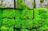 Mossy Brick Floor For Background