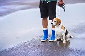 Man walking dog in rain