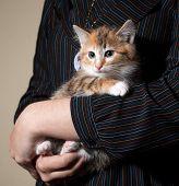 Little Fluffy Kitten Sitting On Hands