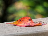 One Fallen Autumn Leaf