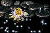 Beautiful Spa Setting Of Passiflora Flower On Zen Basalt Stones With Drops And Pearl Beads In Reflec