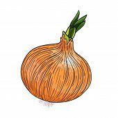Onion vector on white