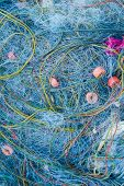 image of blue crab  - fisherman blue net catch crab and fish in sea - JPG
