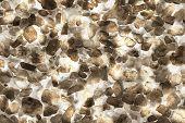 ������, ������: Rock Salt Element Of Design