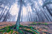 stock photo of decomposition  - Beautiful autumnal landscape of foggy forest with fallen leaves and old tree trunks - JPG