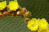 Cactus Flowers On The Leaf Background