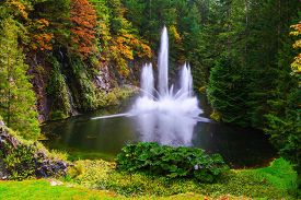 pic of fountain grass  - Dancing fountain in a quiet pond - JPG