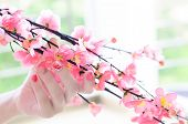 stock photo of nail-design  - Artificial cherry tree branch in a woman hand with a tender pink nail design - JPG