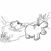 image of hippopotamus  - image of hippopotamus cartoon coloring pages isolated on white - JPG