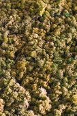 stock photo of canopy  - Spectacular Artificial Model Green Treetops Full- Frame Forest Canopy ** Note: Soft Focus at 100%, best at smaller sizes - JPG