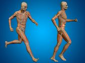 picture of male body anatomy  - Conceptual 3D human man or male skeleton anatomy transparent body on blue gradient background - JPG