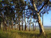 Country Sunrise In Australia