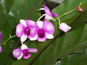 Orchids_092