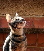 Cat Looking Up poster