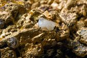 stock photo of gold nugget  - Golden nuggets. geology mining precious metals finance mine