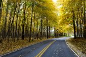Autumn At The Road With Colorful Fall Tress At The Side Of The Road poster