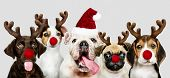 Group of puppies wearing Christmas costumes to celebrate Christmas poster