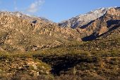 Catalina Mtns