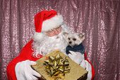 Santa Claus with a Dog. Santa holds a small Morkie dog with a Gold Christmas Present in a Photo Boot poster
