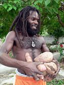 Organic Jamaican Farmer